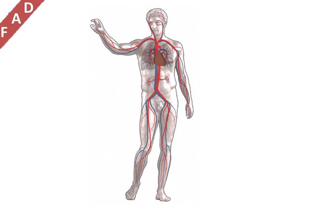 PATOLOGIE CARDIOVASCOLARI INNOVAZIONE IN MEDICINA E CHIRURGIA